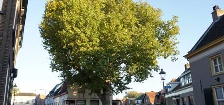 Mag jij jouw boom zomaar kappen? Of is 'ie een van de 17.000 'waardevolle' bomen?