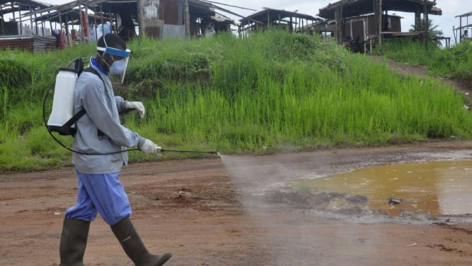 Liberia onderzoekt link tussen nieuwe ebolagevallen en hondenvlees