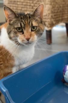 Grillige zomer voor dierenpensions op de Veluwe: late vakantiegangers, annuleringen en besmette baasjes