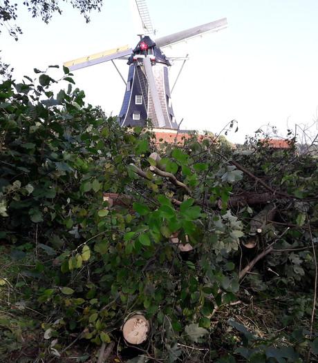 Wéér kappen en zagen in bosje bij Winterswijkse molen Bataaf