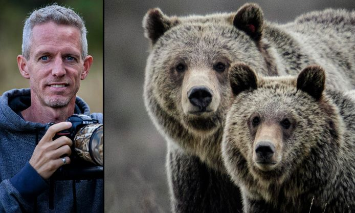 Vlaming overleeft aanval van grizzlybeer.