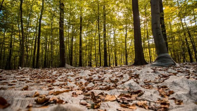 Inwoners ontvangen vijftien euro per aangeplante inheemse loofboom