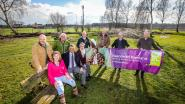 Damme wil 'Mooiste bijenvriendelijke tuin van Vlaanderen' creëren en krijgt daarvoor hulp van Dominique Persoone