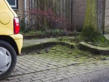 Minder bomen en meer parkeervakken in Helmondse Maaslaan