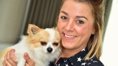 Gestolen chihuahua na vijf maanden weer thuis, met dank aan alerte dierenarts uit Roubaix
