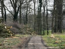 Onthutsende kaalslag in De Lutte: 'Schatkamer van Twente is een pronkstuk kwijt'