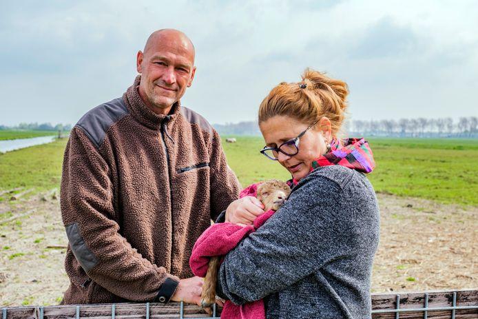 Heidi Looy en haar man Wilco van Roon, ook wel genoemd de Sluipwijkse schapenboertjes, zorgen voor racka schapen.