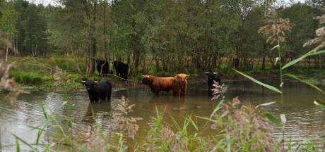 Balende agrariërs naar Raad van State vanwege wateroverlast, ook zorgen over schade aan woning