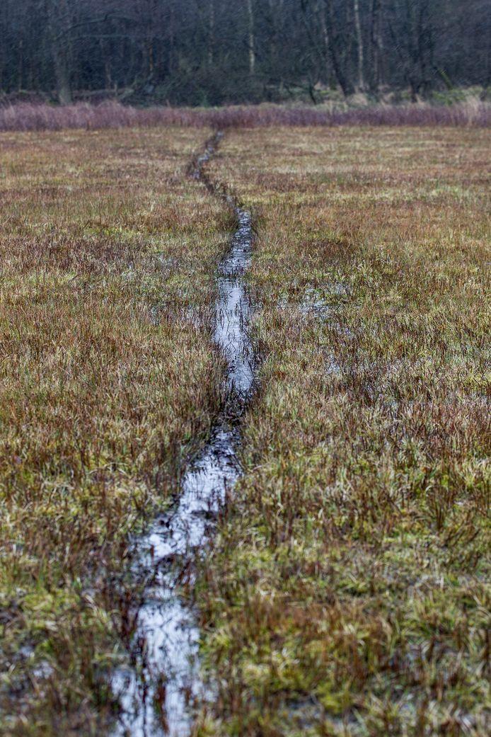 Soerendonk - Jager Ploos van Amstel in gebied de Goorloop waar veel zwijnen zijn (pad van zwijnen)