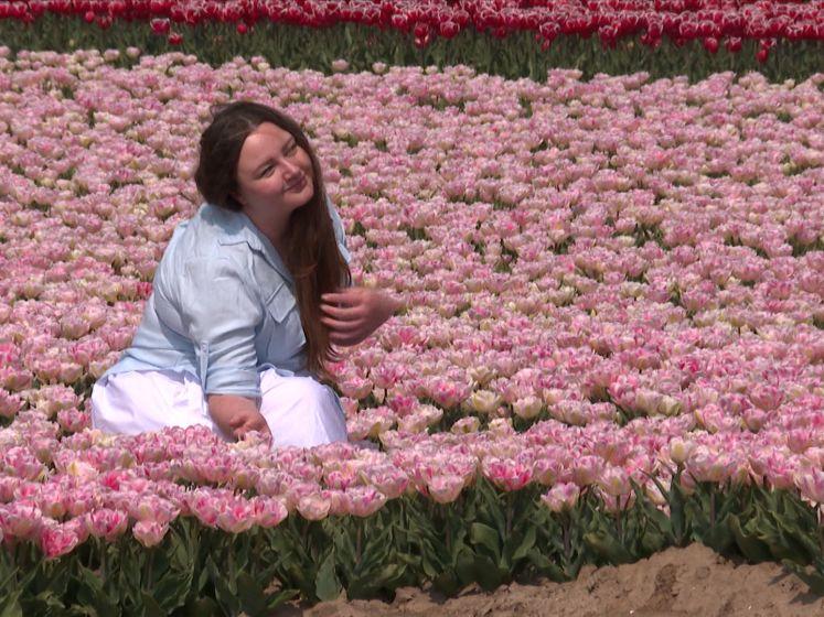 De perfecte Instagramfoto zorgt voor vernieling van honderden tulpen in Meerdonk