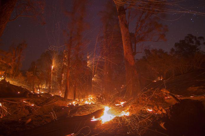 Bosbrand in Californië (archiefbeeld).