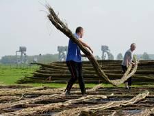 Takkenbossen beschermen rivierbodem bij groot onderhoud stuwen
