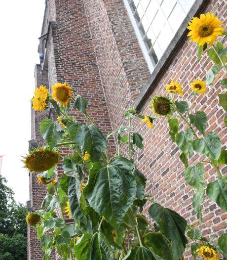 Opnamen Van Goghkerk voor wereldwijde serie