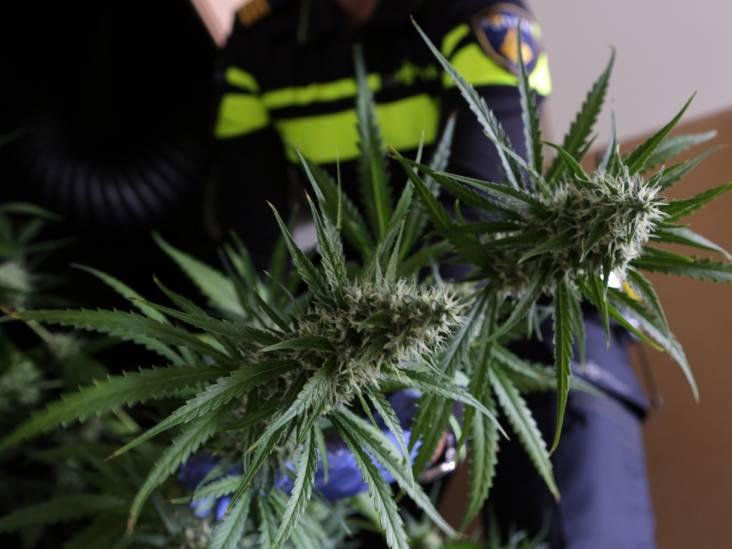 Rotterdammer met 276 henneptoppen en blokje hasj in kofferbak aangehouden bij Wouwse Tol