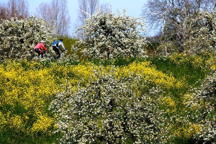 Volop lente op de Diefdijk in Schoonrewoerd.