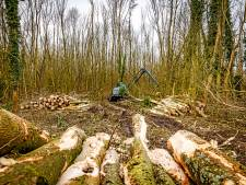 Kritiek op forse bomenkap voor natuurbegraafplaats: 'Kunnen jullie bewijzen dat ze ziek waren?'