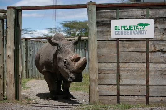 Sudan in zijn onderkomen in Kenia.
