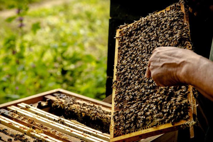 Een imker bij de bijenkasten in de Biesbosch