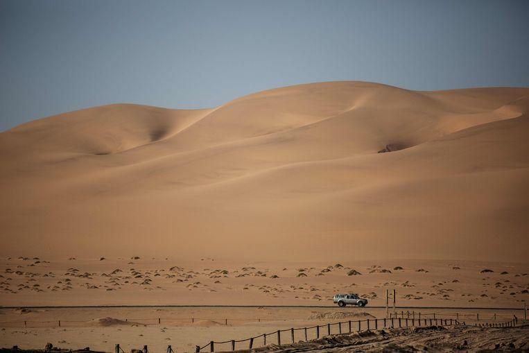 De woestijnduinen van Namibië waar de nog enkele tientallen leeuwen proberen te overleven.  Beeld AFP
