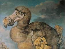 De nieuwe dodo is dichtbij, maar wie mist die dieren eigenlijk?
