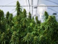 La police de Basse-Meuse démantèle une importante plantation de cannabis en Basse-Meuse
