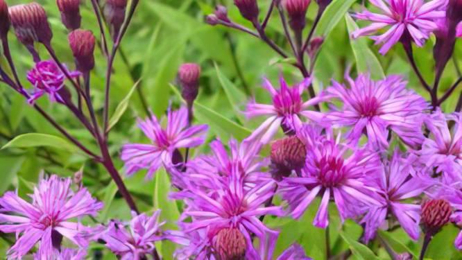 Een kleine tuin vraagt óók om reus van een plant