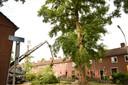 Overslastgevende bomen Van der Duyn Maasdamstraat in Breda gekapt.