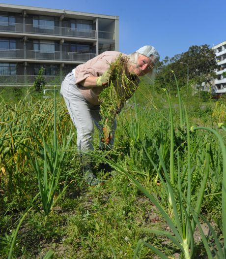 Onkruid groeit als kool in gemeenschapstuin: CitySeeds in Middelburg zoekt hulp voor onkruid-challenge