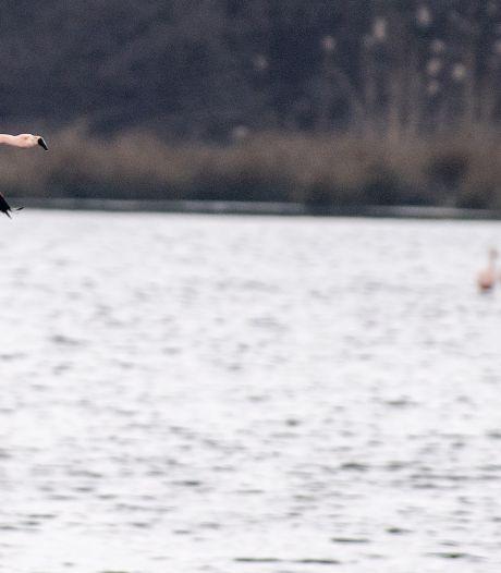Flamingo's kijken? Dat mag, maar houd je aan de regels: 'Draden worden doorgeknipt en honden jagen achter vogels aan'