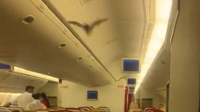 Vleermuis aan boord van vlucht