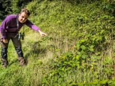Boomkikker kan klimmen als een aap en vallen als een baksteen (en hij voelt zich nog thuis ook, in Twente en Achterhoek)