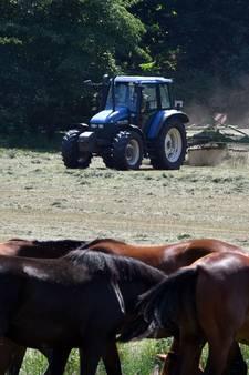 Hitte vreet voor Twentse boeren energie én geld