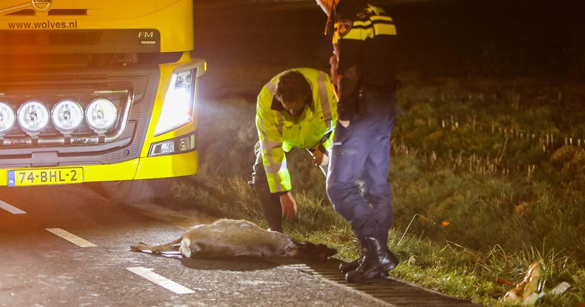 Botsing in buitengebied tussen Klarenbeek en Apeldoorn: ree dood, auto vernield.