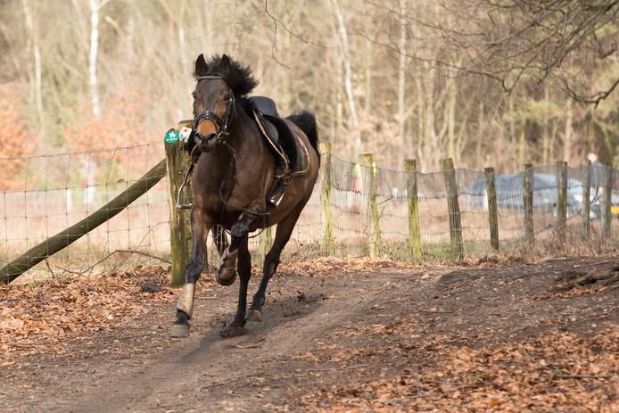 Het op hol geslagen paard, dat Marc Bouwmeester torpedeerde.