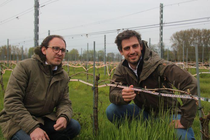 Alexander Schmidt en Laurens De Vos tonen hun ingenieuze Frolight-systeem, dat wel wat weg heeft van kerstverlichting.
