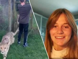 """Belgische aangevallen door jachtluipaard in Zuid-Afrikaans dierenpark: """"Dat ik struikelde en viel heeft waarschijnlijk mijn leven gered"""""""