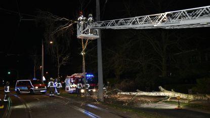 Tramverkeer stilgelegd door omgewaaide bomen