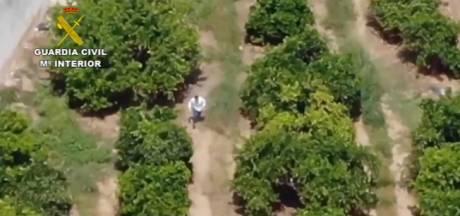 Un homme en cavale tente d'échapper à la police en se cachant sous un oranger