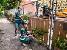 Hugo en zijn compagnons dachten: 'Weg met die saaie bouwhekken, maak ze groen' (en nu staan ze overal)
