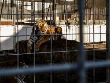Circussen Italië balanceren op randje afgrond: boeren springen bij om dieren te voeren