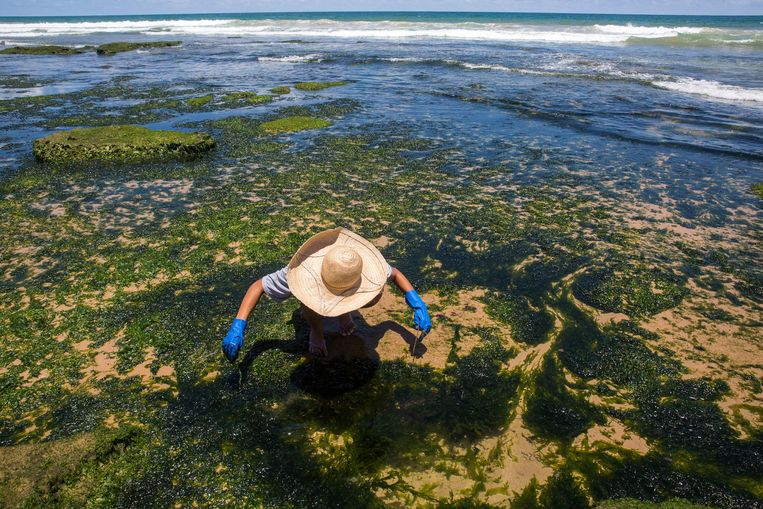 Een vrijwilliger maakt het strand schoon in Lauro de Freitas in de staat Bahia in Brazilië.