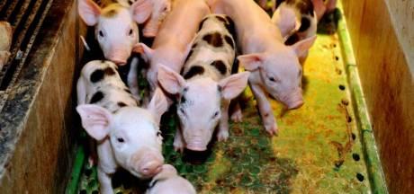Bewoners verzetten zich tegen varkenshouderij Moergestel