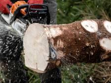 Bomenkap in Mastbos en Liesbos voor beter bos in de toekomst