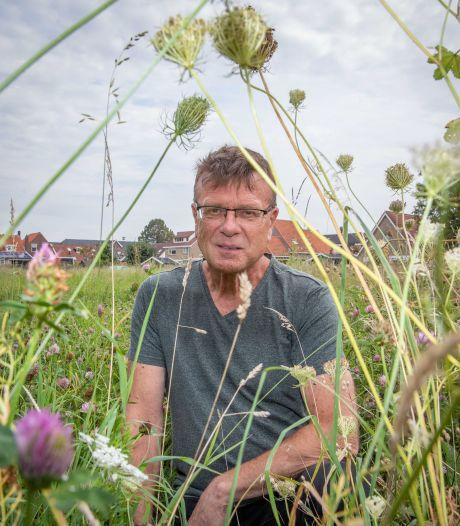 Kaasjeskruid, klaver en wilde peen: Ovezande is een paradijs voor vlinders