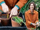 Zaaien, splitsen of stekken: onze tuinexperte legt uit hoe je zelf makkelijk planten kweekt
