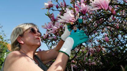 Brits onderzoek: wie tijd doorbrengt in eigen tuin, is gezonder
