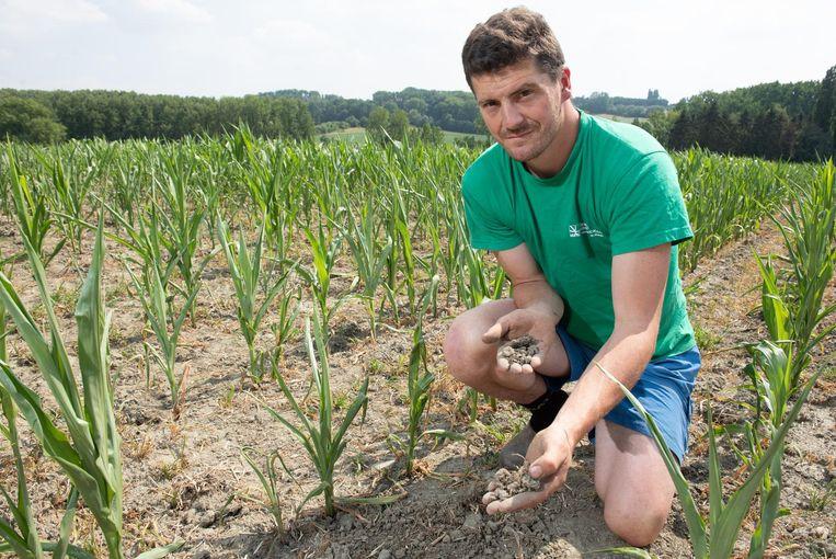 Landbouwer Lieven Destoppeleire op een kurkdroge akker met maïs die veel te klein staat en niet meer groeit.