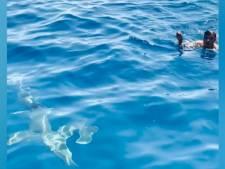 Il saute dans une eau infestée de requins pour sauver un oiseau