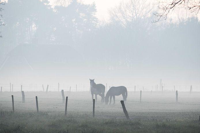 Paarden in de mist (archieffoto)