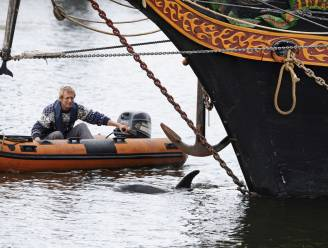 Dolfijn die fan was van schepen en Nederland in de ban hield, overleden na botsing met schip